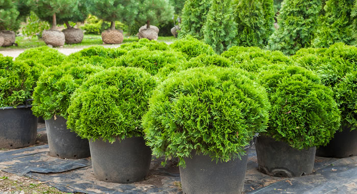 Planting Trees and Shrubs for Landscaping