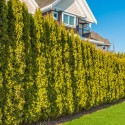 How Much Will It Cost To Prune My Hedge?