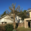 Pruning Your Overgrown Weeping Willow Tree