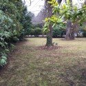 Our New Fall Yard and Property Clean Up Packages