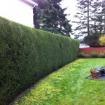 yard-and-hedge-trimming-clean-up-after