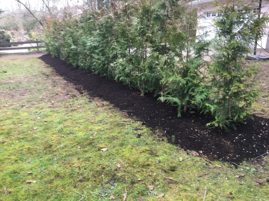 Planting Privacy Hedges