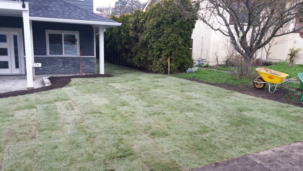 finished sod installation