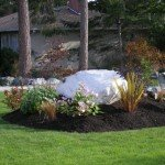 landscaping-lawn-maintenance-victoria-bc2