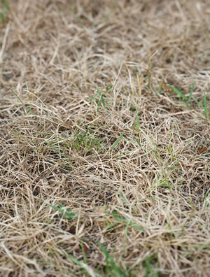 3 Common Lawn Care Mistakes