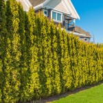 how much does it cost to prune hedges