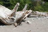 Using Driftwood In Your Landscaping
