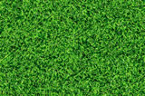 Green Grass Colonial Landscaping Ideas