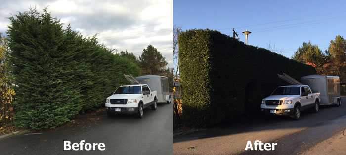 Tree and Hedge Pruning Services