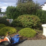 Front yard clean up garden bed before photo.