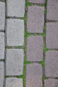 Prevent Weeds and Moss From Growing In Between Your Bricks or Paving Stones